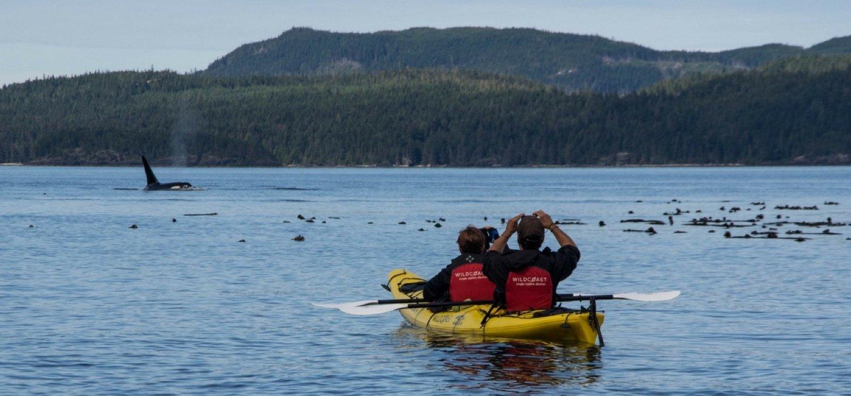 Kayak-mer-orques