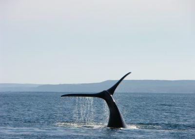 balaine-kayak-sea-nature