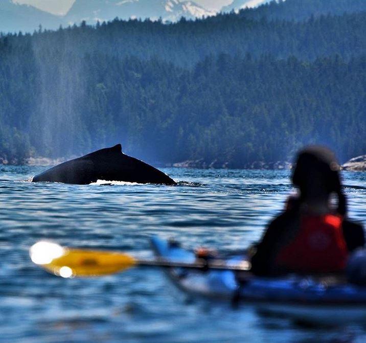 location-kayak-mer-orques-6