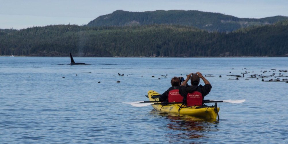 orca-camp-kayak-vacance-decouverte-8